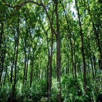 Seventy Thousand Acres Of Forest Land Allotment Cancelled
